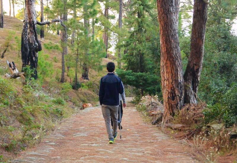 Woods in Kumaon